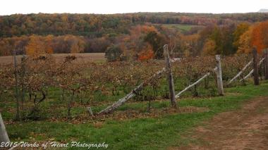 Gouveia Vineyard in Autumn