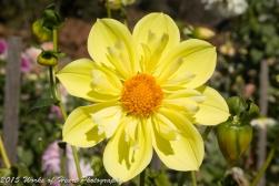 Flower of Alcatraz