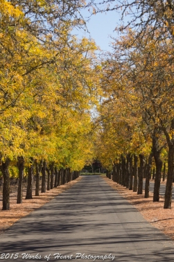Sterling Vineyards, Napa, California